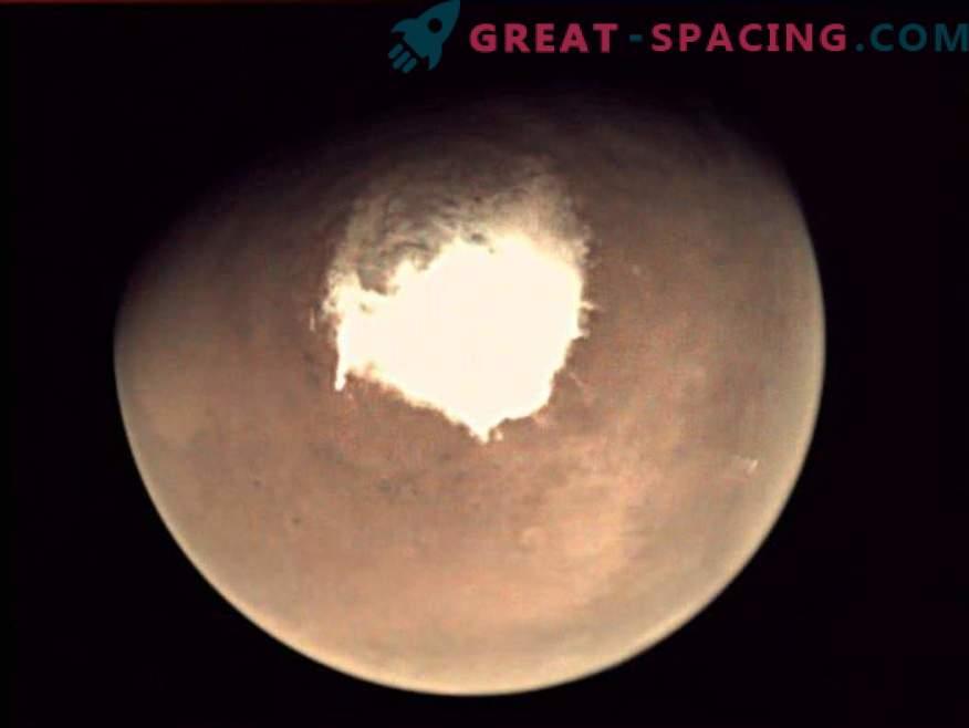 Que organismo terrestre pode se esconder na água salgada marciana?